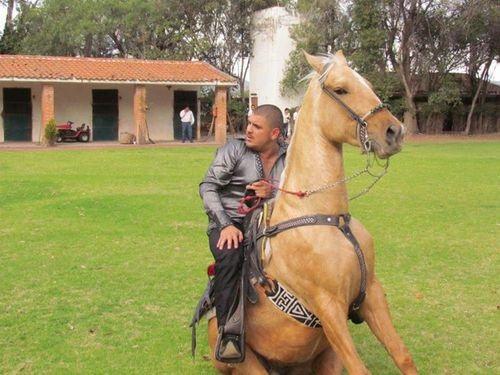 el komander horse